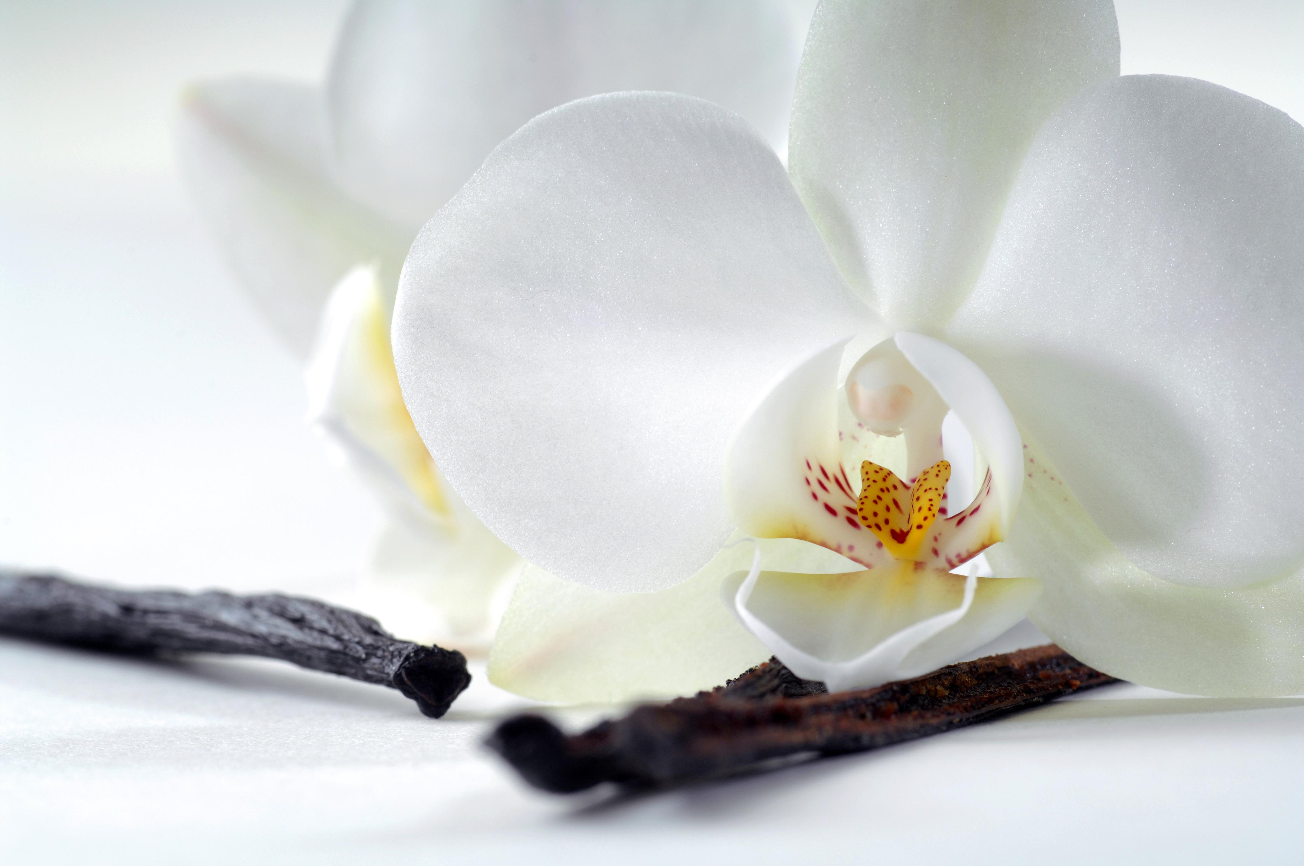 Extracts - Vanilla Bold